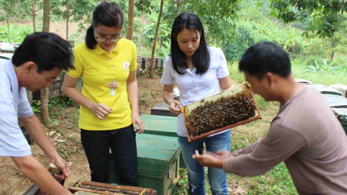 Trại ong quay mật ong rừng Hoa YênBạch