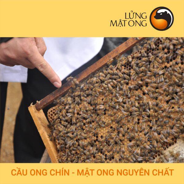 hình ảnh sản phẩm mật ong hoa cao nguyên