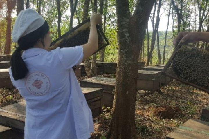Kỹ sư của Honimore kiểm tra cầu mật ong rừng hoa Cao Nguyên