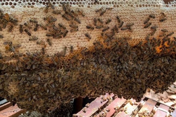 Mật ong nuôi trên rừng sẽ cho mật ong rừng