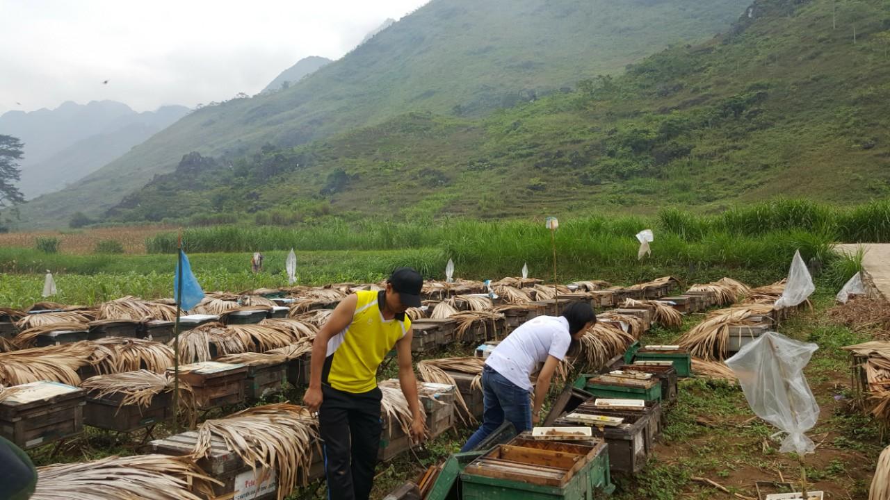 Trại ong Honimore ở Hà Giang