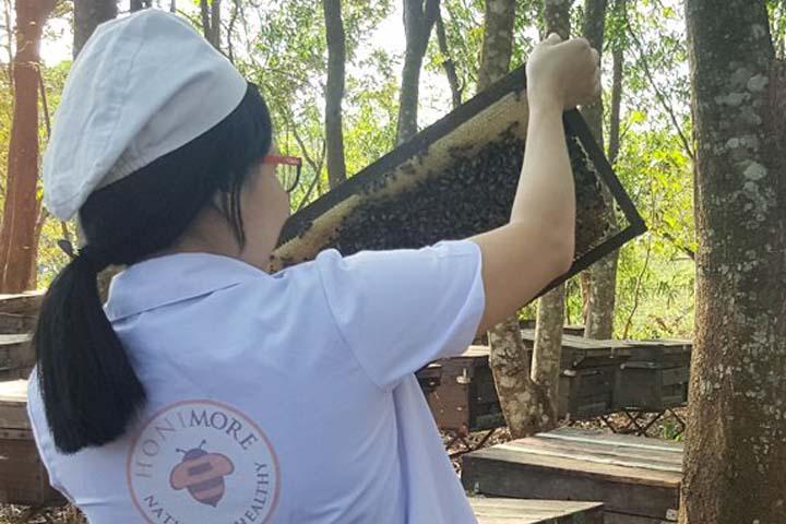 Kỹ sư tại Honimore đi thăm các đàn ong trên Đắk Lắk