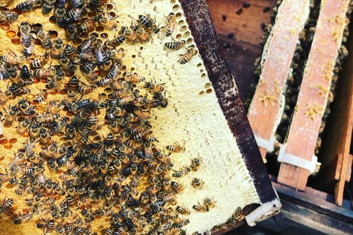 quá trình ong luyện mật