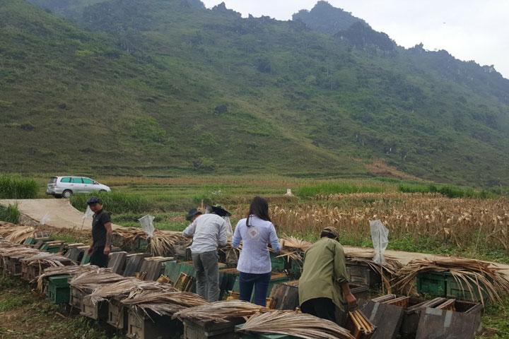 Một trong nhiều Trại ong của Honimore tại Hà Giang