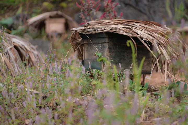 Thùng ong đặt len lỏi giữa cảm móm đá ở Hà giang để thu hoạch mật ong rừng nguyên chất