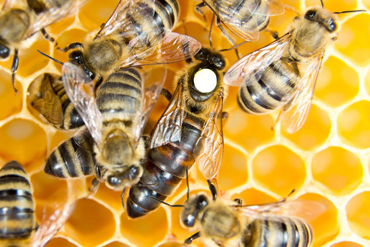ong làm ra mật