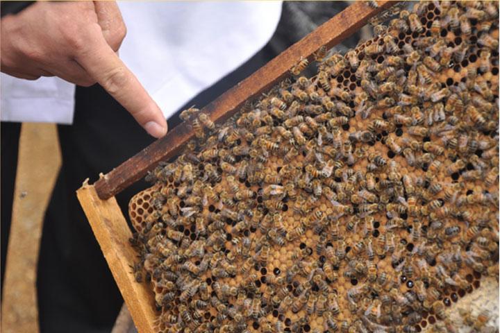 Mật ong nguyên chất và những điều cần biết