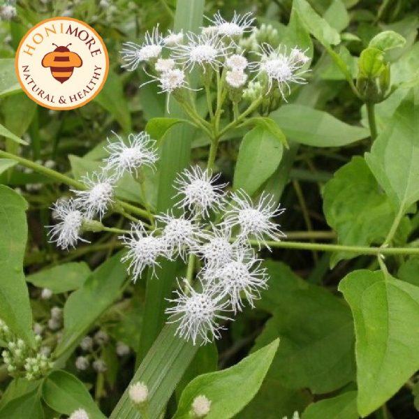 Combo Mật ong rừng Hoa Yên Bạch 1kg - 100% Mật ong chín Honimore