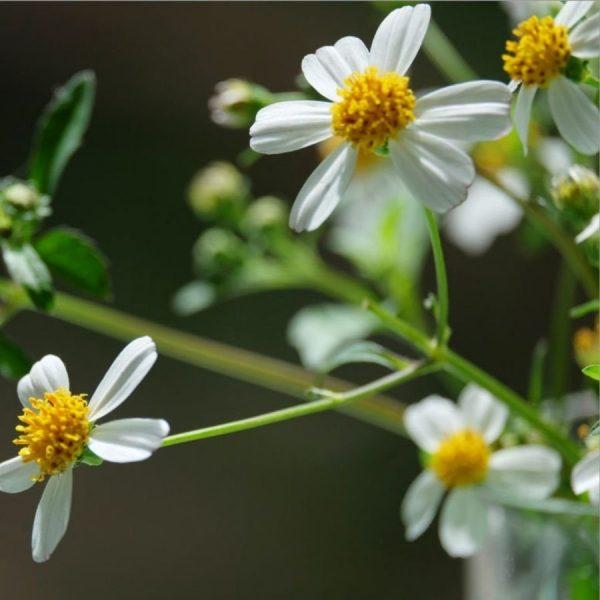 Combo Mật ong rừng Hoa Xuyến Chi 1kg - 100% Mật ong chín Honimore